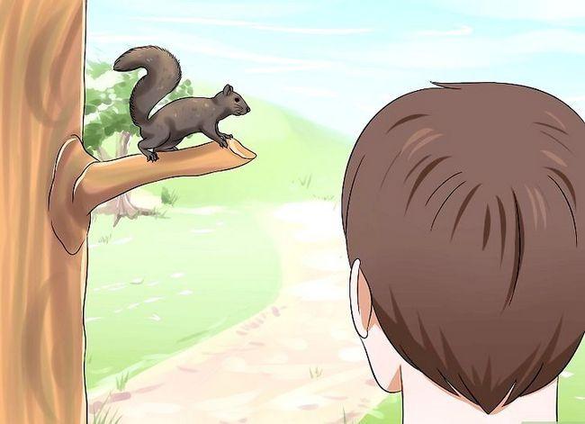 Sådan rejser du en babyekorrel