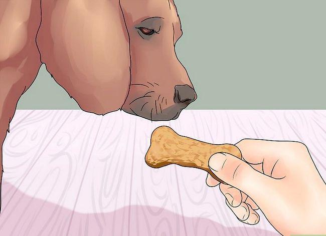 Hvordan lærer din hund at give benet