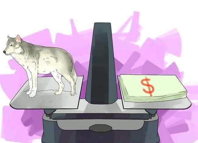 Billede titel Own a Pet Wolf Trin 3
