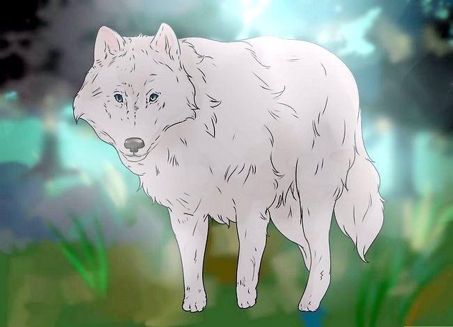 Billede titel Own a Pet Wolf Trin 4