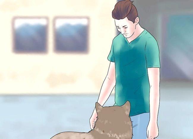 Billede titel Own a Pet Wolf Trin 6