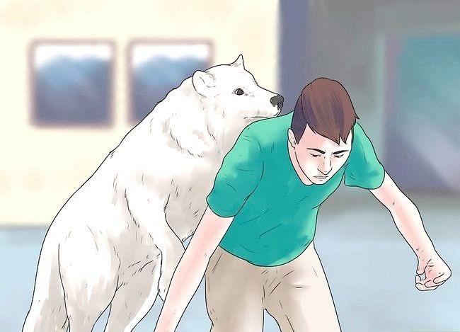 Billede titel Own a Pet Wolf Trin 7