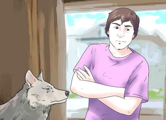 Billede titel Own a Pet Wolf Trin 10