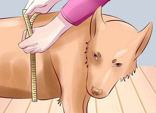 Billedbetegnelse Behandl arthritis hos hunde Trin 1