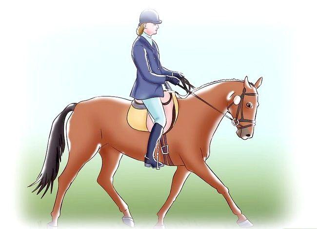 Billede med titlen Post mens du trøjer på et hest Trin 4