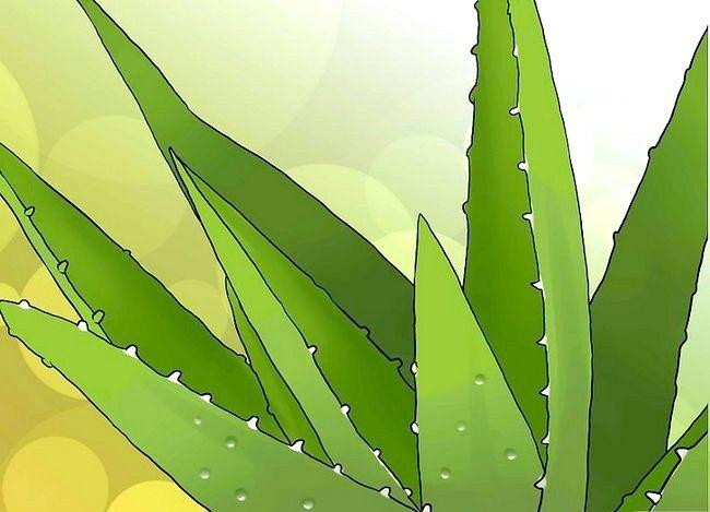 Hvordan man bruger aloe vera-terninger til at behandle en solskoldning