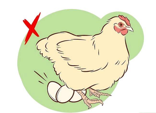 Billede med titlen Vaccinate Chickens Trin 2
