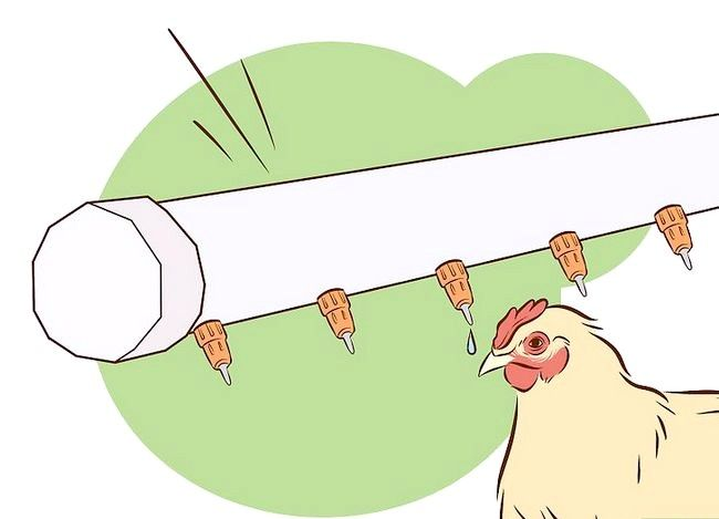 Billede med titlen Vaccinate Chickens Trin 29