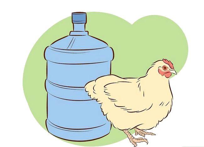 Billede med titlen Vaccinate Chickens Trin 32